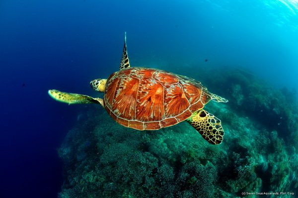 turtles are a common sight on dive safaris